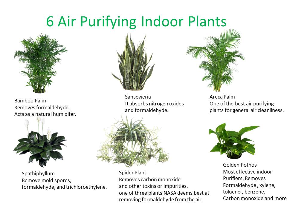 Which Plant Do You Need In Your Indoor Space Plantscapers