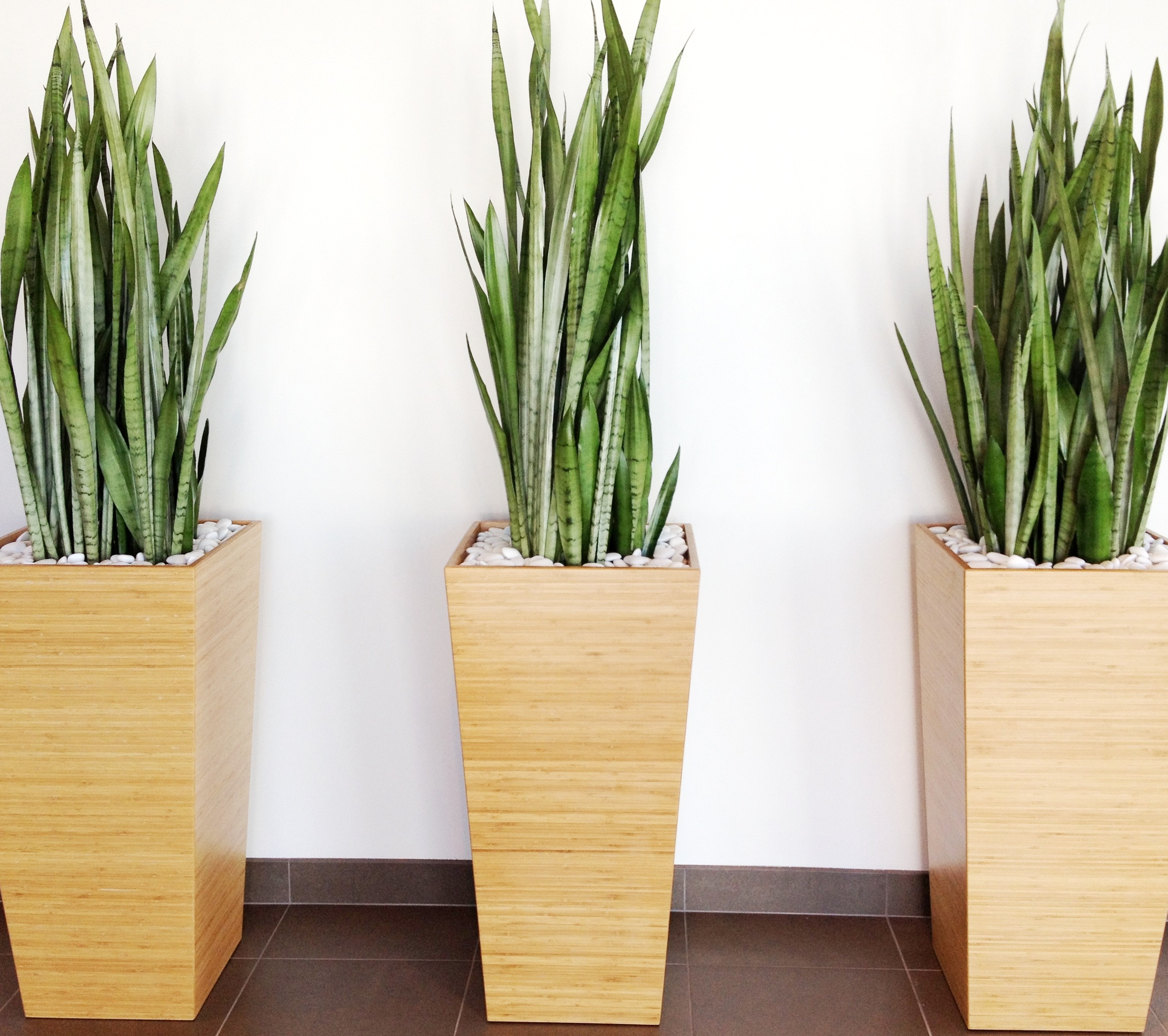 Pics for modern tall indoor plants Tall narrow indoor plants