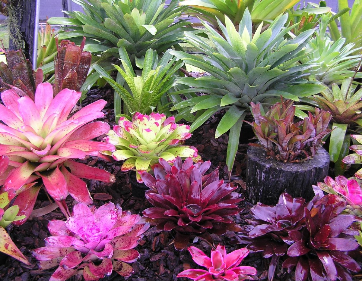 Think bromeliads plantscapers for Garden plants