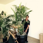 Venancio installing fresh palms for big wedding Such a hardhellip