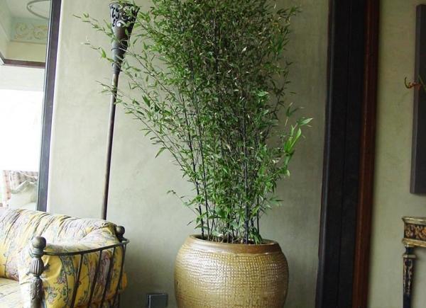 patioscape-tooma-bamboo