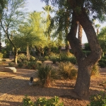 Beautiful Palm Desert landscaping landscapecaptures succents
