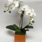 Orchid in Orange Square
