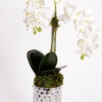 Orchid in Silver Vase