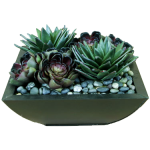 Succulents in bowl