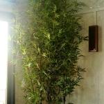 preserved black cane bamboo