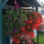 Love gardens! Flowers in Mission Bay Dan Diego flowers hangingout