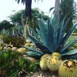 Love succulent gardens succulentsdroughttolerant