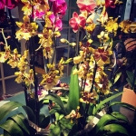 Are these exotic orchids coming your way? They can Justhellip