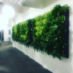 Another great living wall houzz San Diego corporate office livingwallhellip