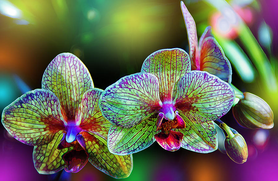 Orchids - Plantscapers...