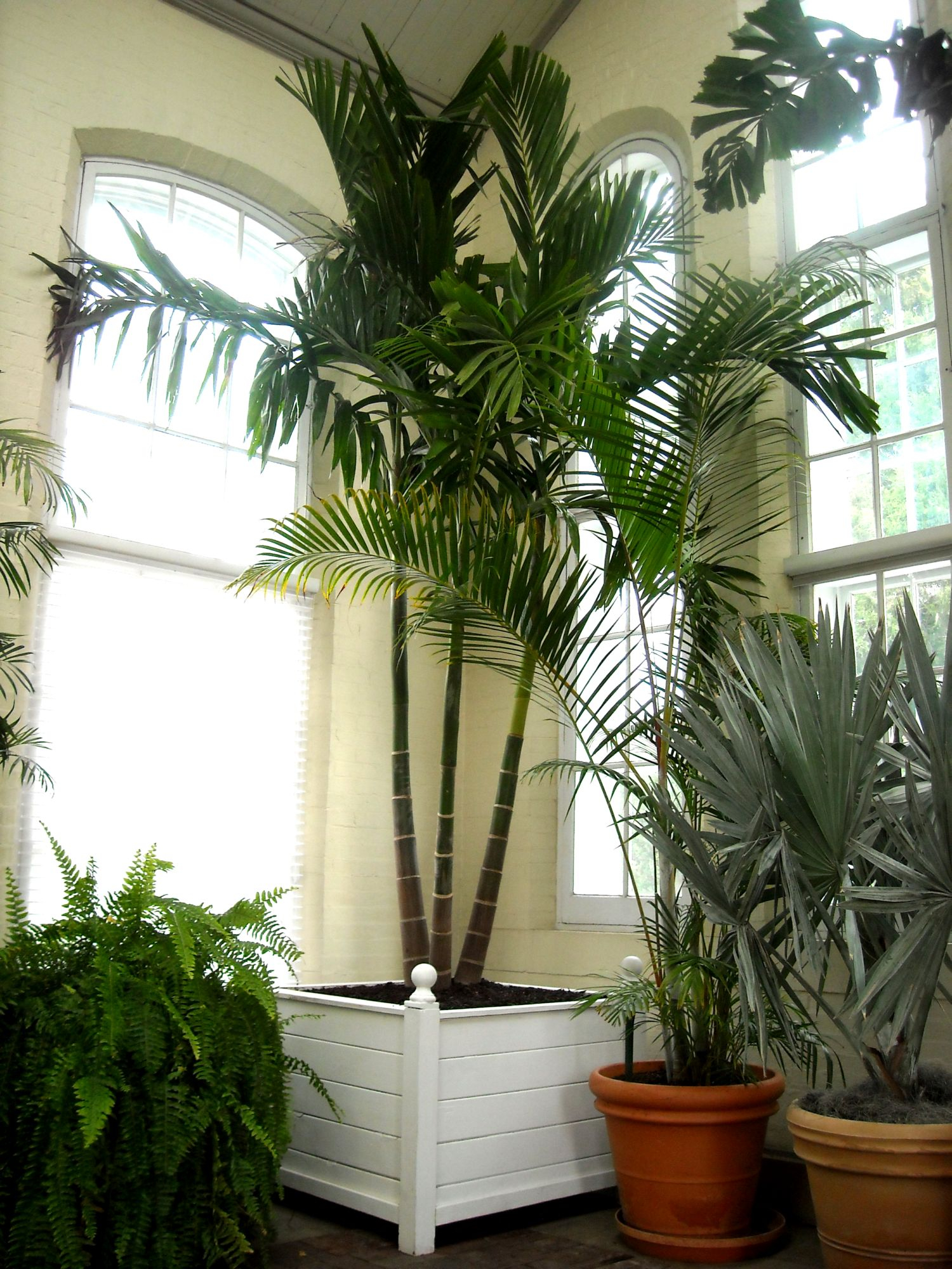 Bring On The Palms Indoors Plantscapers