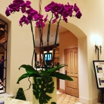 Gorgeous elegant orchids La Quinta Country Club Way to gohellip