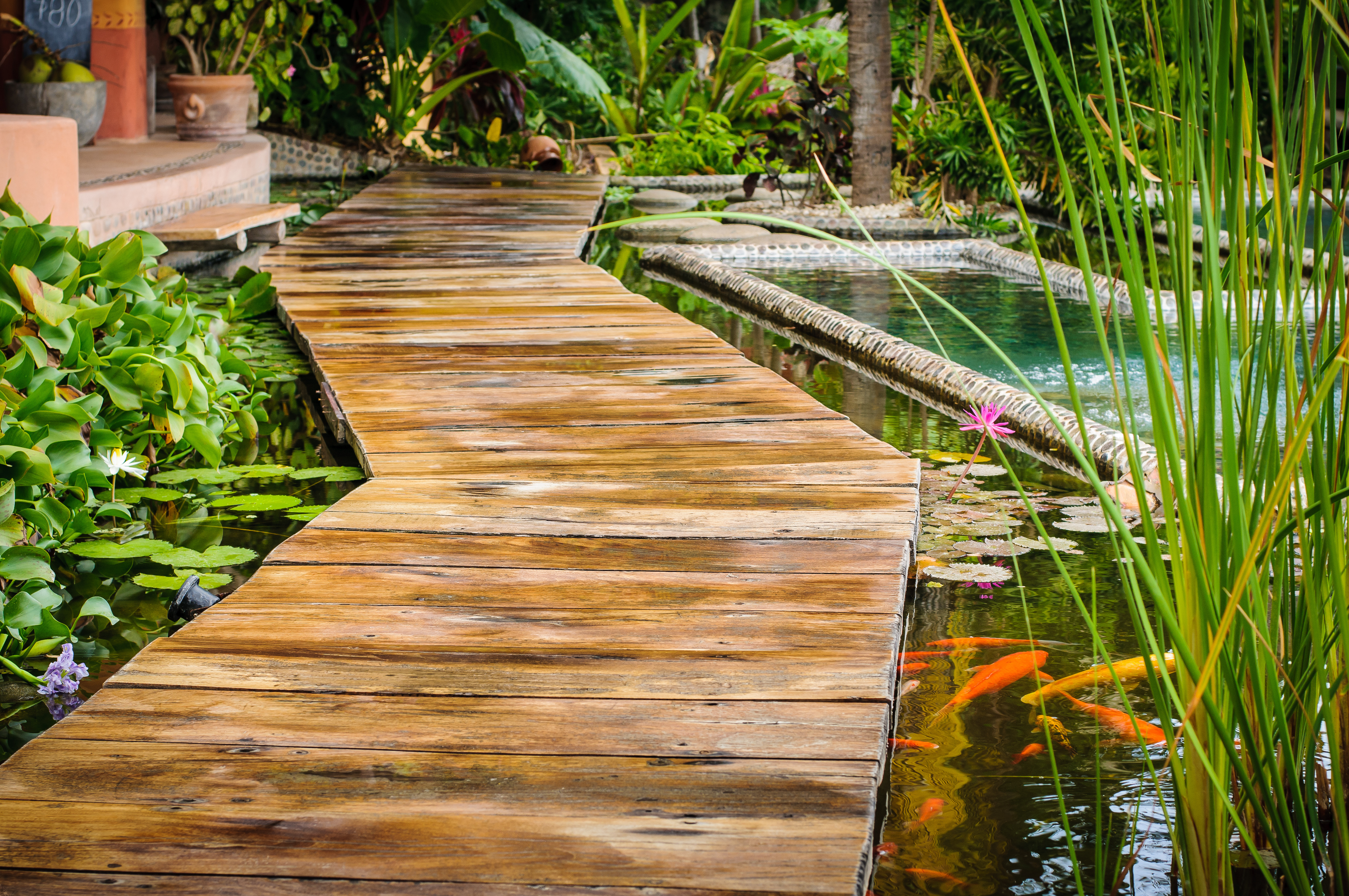 The well building standard plantscapers for Koi pond plants