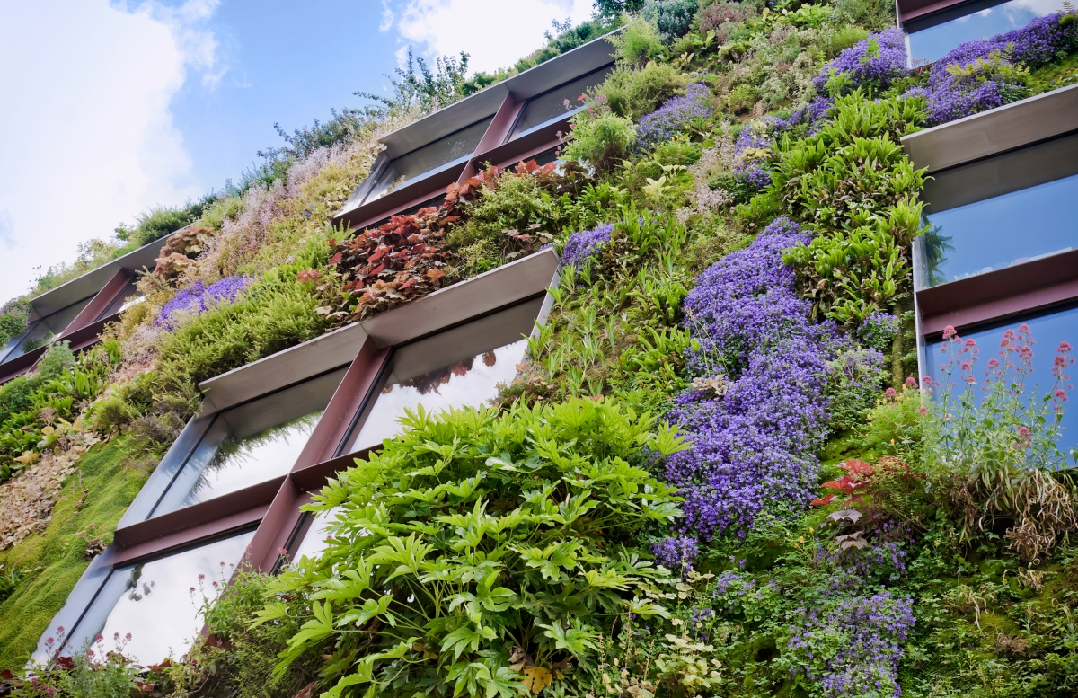 The WELL Building Standard · Living Wall Shutterstock_89534434