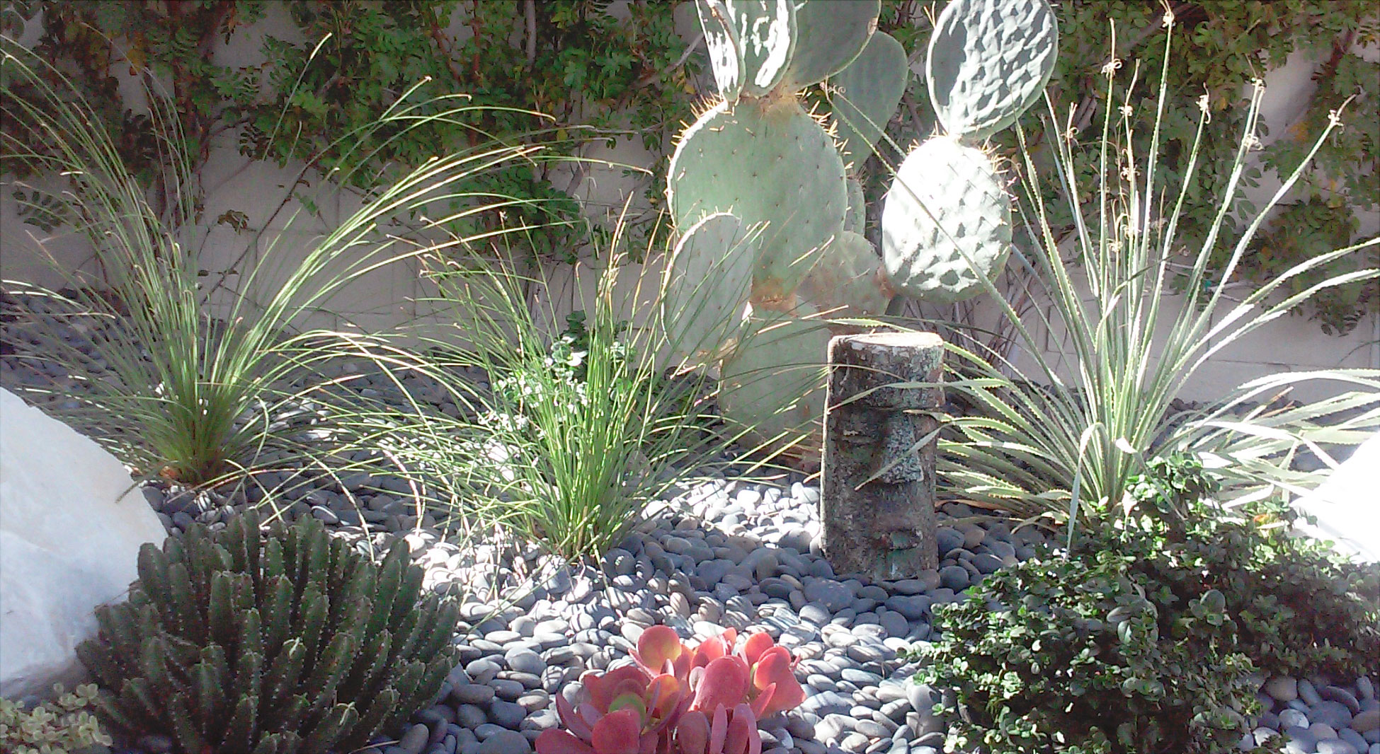 desert landscapes on the modernism week garden tour plantscapers