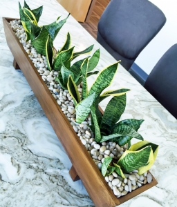 Plants-on-conference-table
