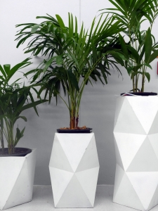 Palms in decorative containers