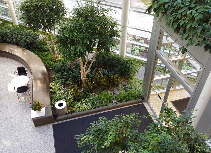 office atrium greenery