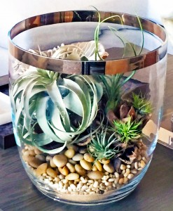 Tillandsia is perfect for creating wonderful accents with plants for the home.
