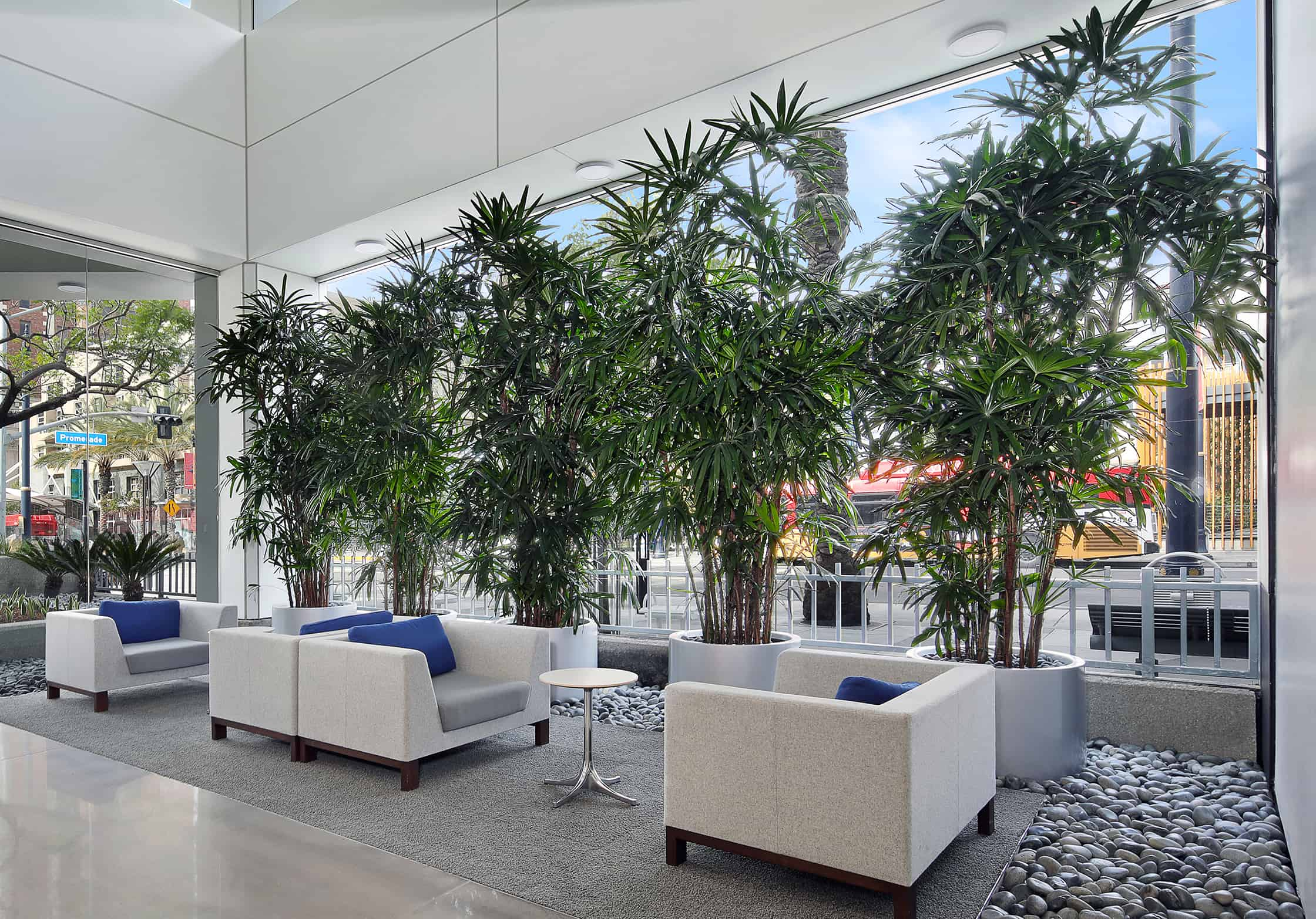 Living Trees Indoors Brings In A Feeling Of Wellness To