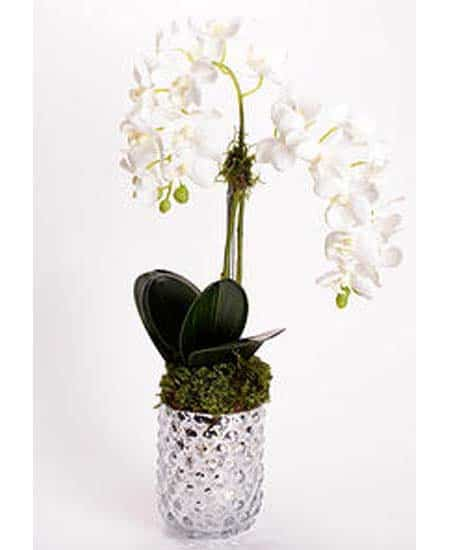 Orchid In Silver Vase 450x550 Plantscapers